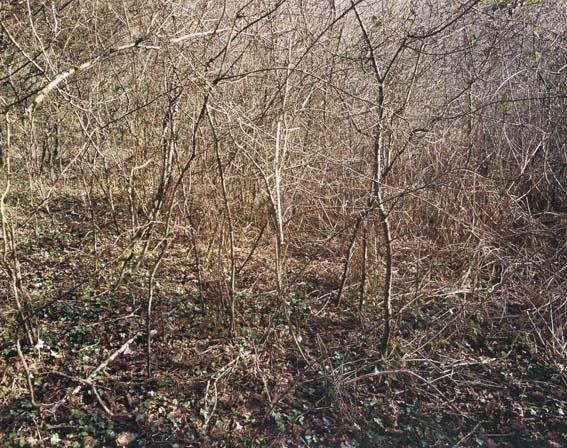 wildwood04