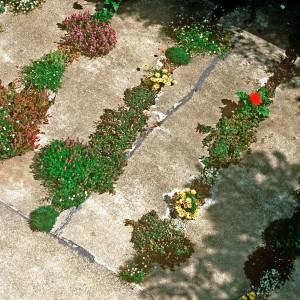 20100404-Crack-Garden-by-CMG-Landscape-Architecture