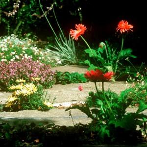 Crack Garden 01