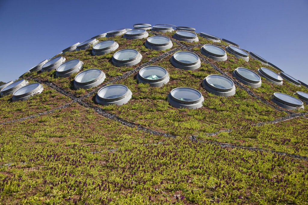 California Academy Of Sciences Living Roof By SWA Group 01