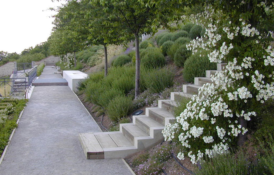 New stairs and botanical roses Landscape Architecture