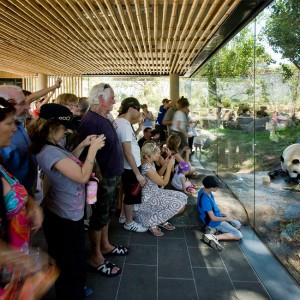 Understanding the behavioural characteristics of the giant pandas was critical to designing an immersive environment that allows the animals to behave as they would in the wild within their 3,000 square metre enclosure.