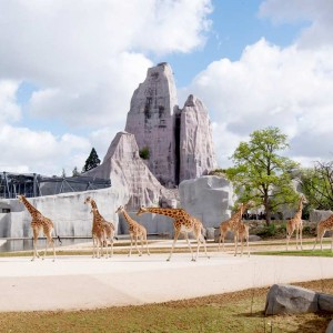 The Paris Zoological Park opened its doors again in April, 2014 after 27 months of renovation work that transformed it to the core while renewing the zoo's existing strong points, most notably the gardens' iconic Great Rock. 40% more landscaped space has been added to the original 1934 zoo, but most of all, it's the evolving vision of the relationship between humans and animals that has been completely revisited.
