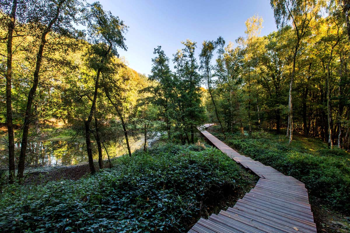 ww1 landscape memorial forest - photo #6