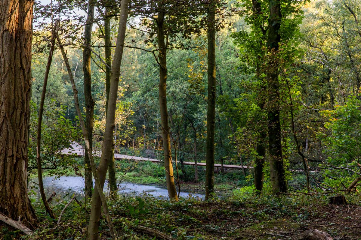 ww1 landscape memorial forest - photo #12