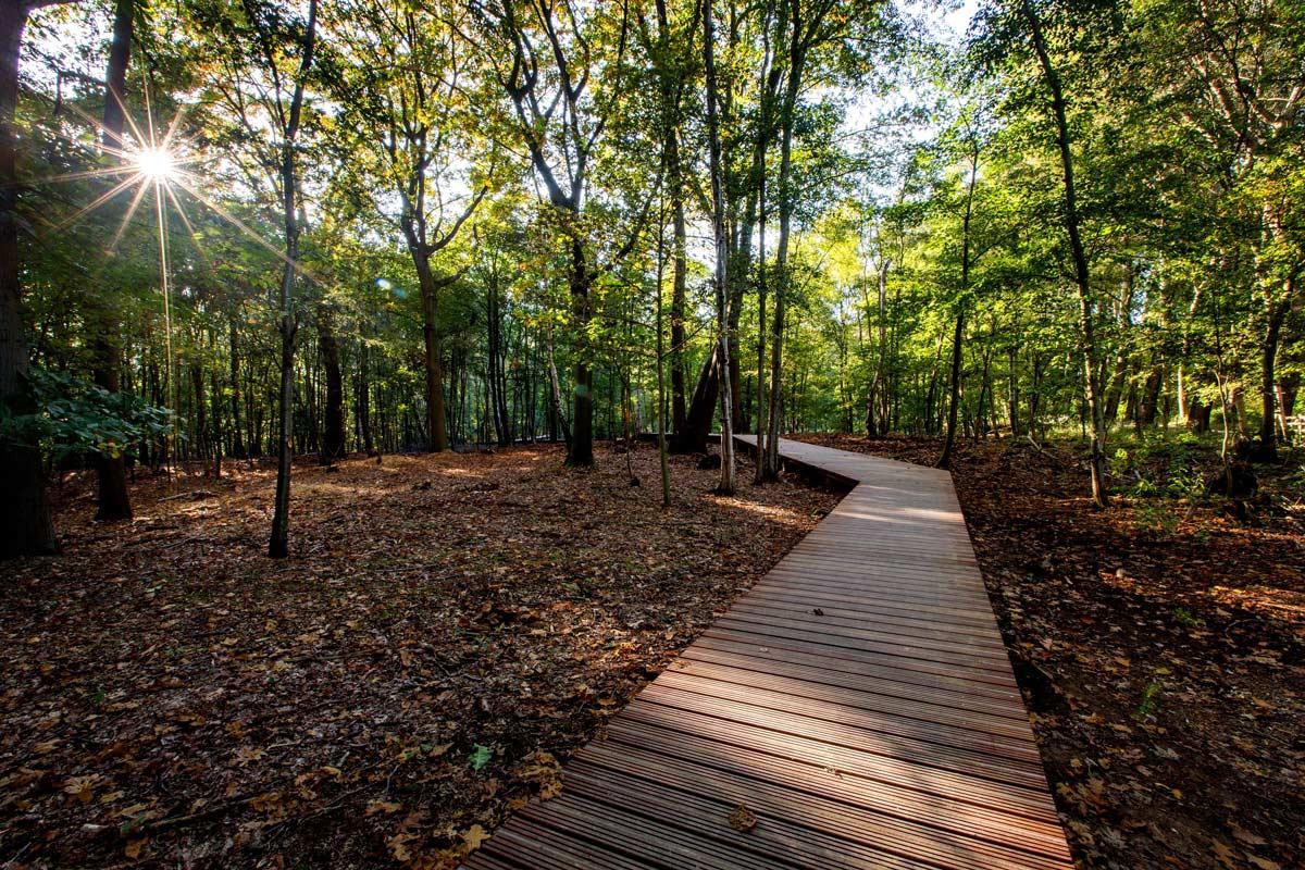 ww1 landscape memorial forest -#main