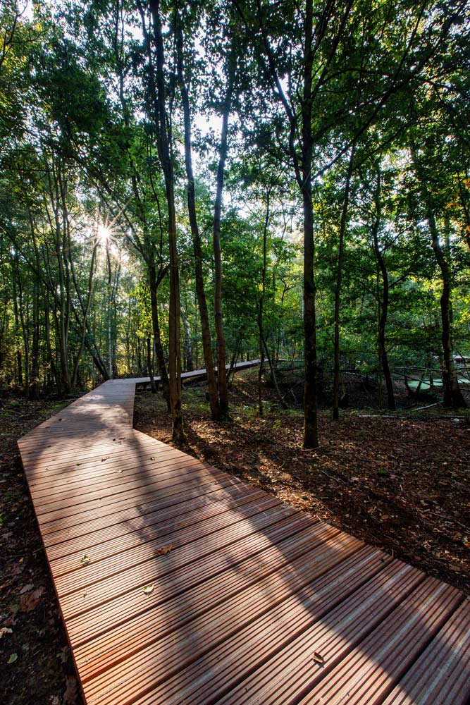 ww1 landscape memorial forest - photo #3
