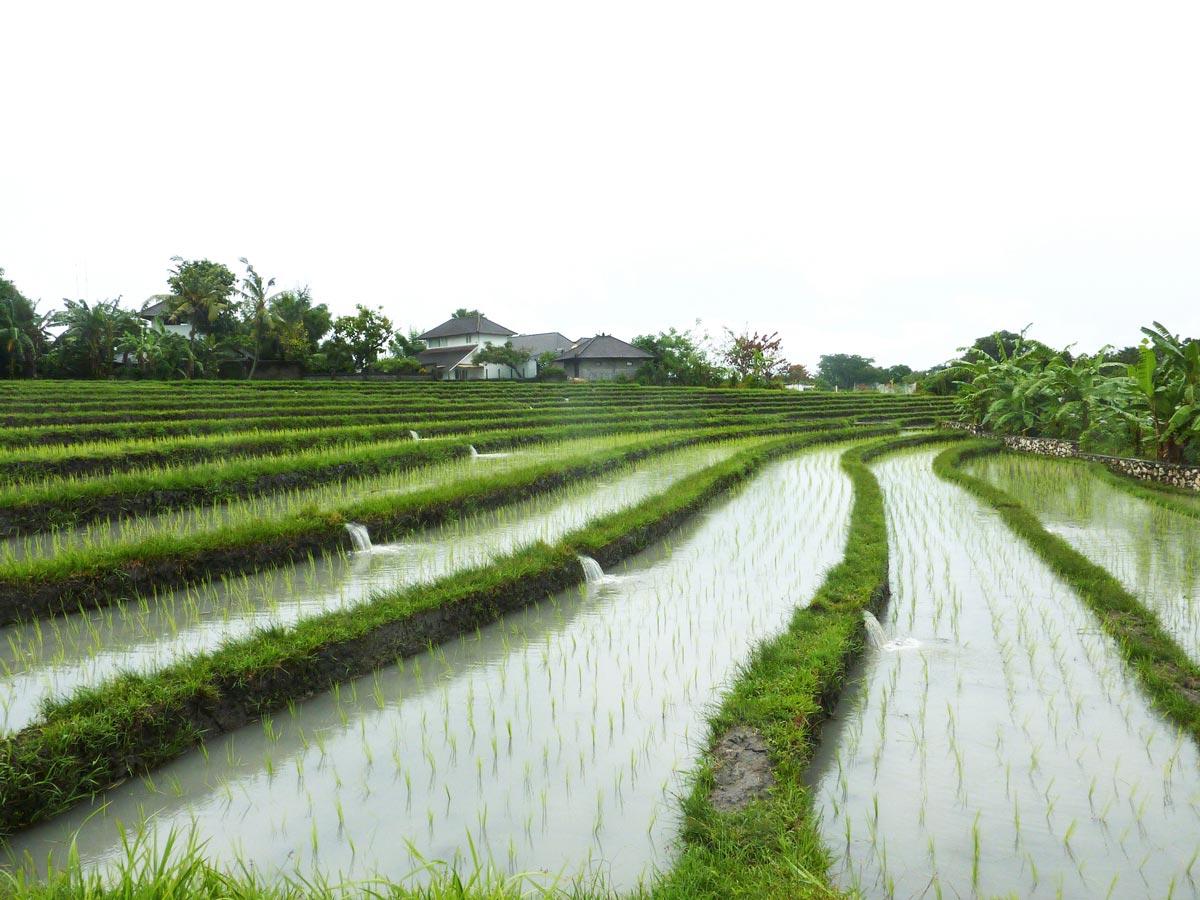 06_Bali_JR_02_L_v01
